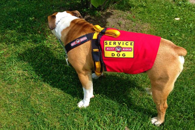 Ruff Rider Service Dog Cape