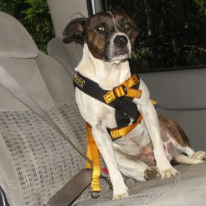 sm_2_roadie_harness